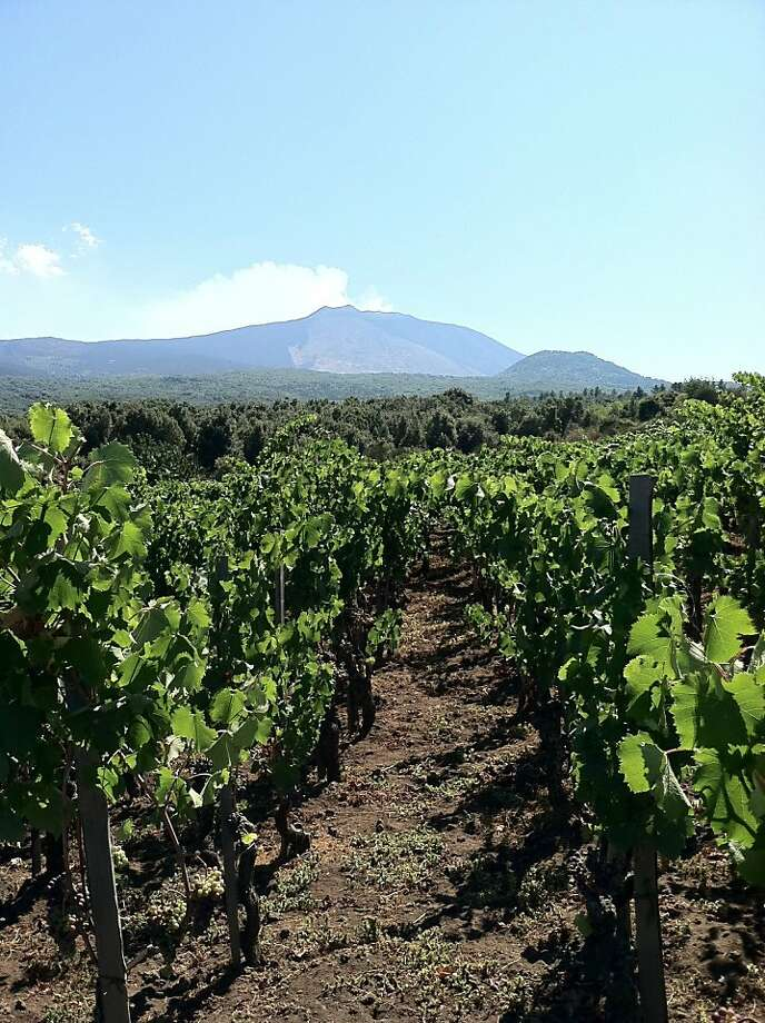 The vineyards of Salvo Foti grow within view of Mount Etna on Sicily. Foti has emerged as one of the top enologists in the region, as well as an ambassador for the island's improving wines. Photo: Talia Baiocchi