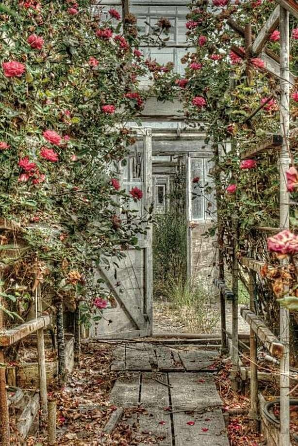 """Doors and Roses,'' by Ken Osborn (2007) Photo: Ken Osborn"