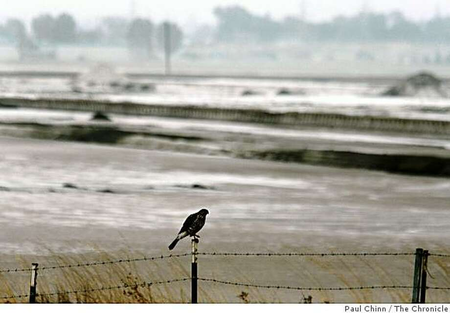 A bird is perched on a fence post at the perimeter of the Cargill salt evaporators in Redwood City, Calif. on Wednesday, Oct. 31, 2007. Photo: Paul Chinn, The Chronicle