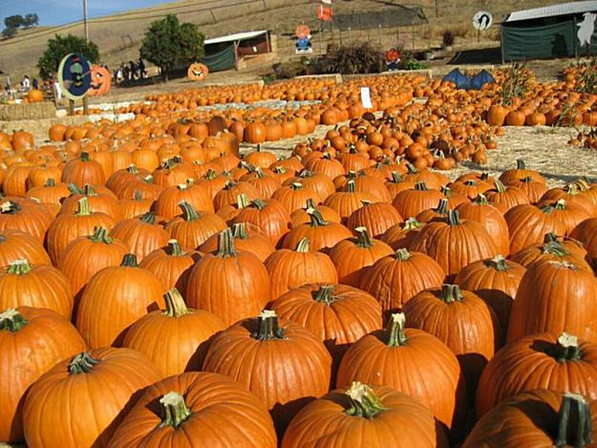 Clayton Valley Pumpkin Farm