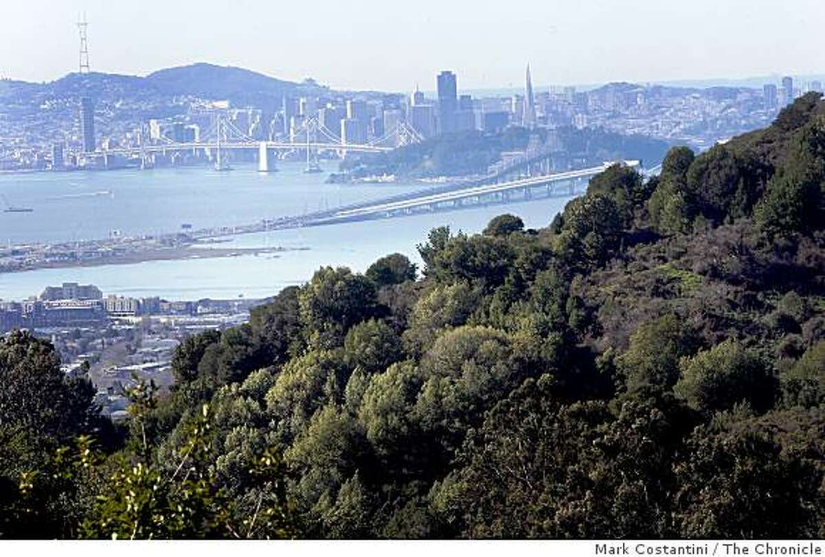 Restored view of San Francisco is photographed Oakland, Calif. on Tuesday, January 23. 2009. A removal of eucalyptus trees was done in the area two years ago that advocates say restored the view.
