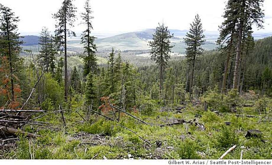 A view of harvested land at Camp McCroskey Boy Scout Camp near Tensed Idaho, on Tuesday June 10, 2008 (Photo/Seattle Post-Intelligencer, Gilbert W. Arias) Photo: Gilbert W. Arias, Seattle Post-Intelligencer