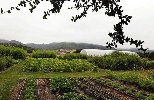 The French Laundry's 3-acre garden supplies 30 percent of the restaurant's produce, it also inspires home gardeners who are welcome to visit and ask the staff questions about what the nation's top restaurant is growing. The garden is as much a test site for vegetables and flowers a supplier to the restaurant. Right now, they're growing root vegetables from the Andes. Wednesday August 18, 2010. Photo: Lance Iversen, The Chronicle