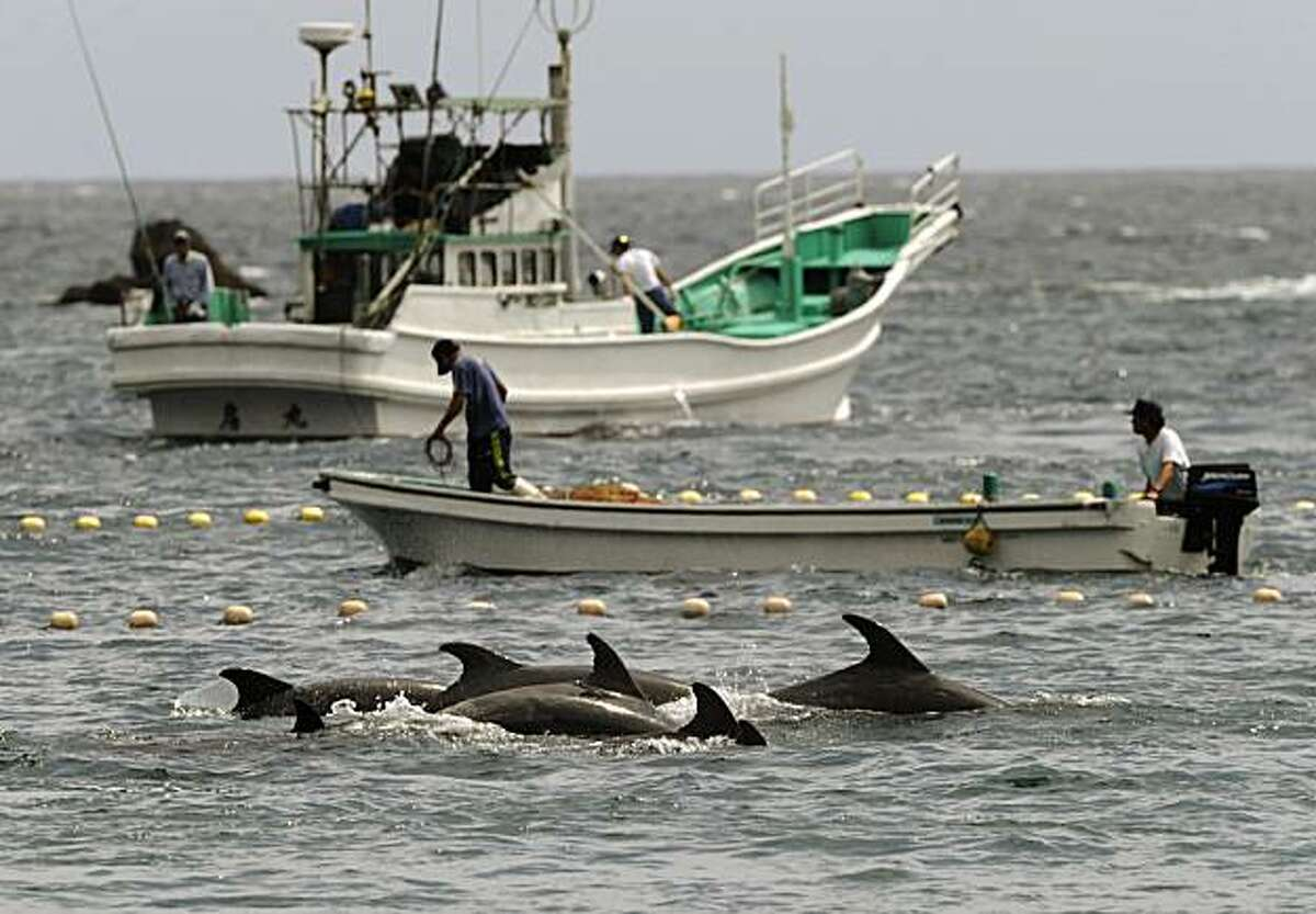 Fishermen drive bottle-nose dolphins into a net during their annual hunt off Taiji, Wakayama Prefecture (state), Japan, Thursday, Sept. 2, 2010. The Japanese government allows a hunt of about 20,000 dolphins a year, and argues that killing them, and alsowhales, is no different from raising cows or pigs for slaughter.