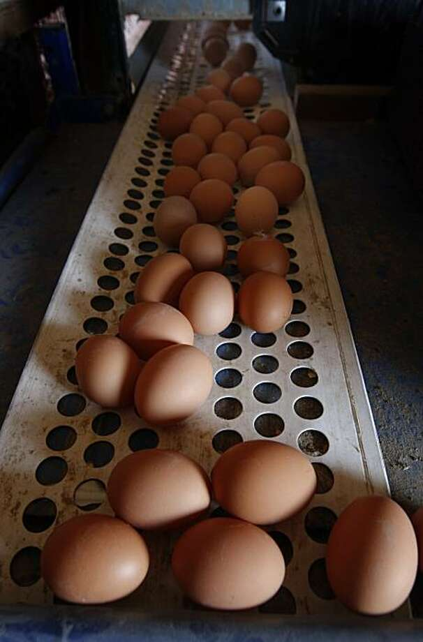 Freshly-laid brown eggs roll down a conveyor belt in an organic hen house at Sunrise Farms in Petaluma, Calif. on Wednesday, Aug. 25, 2010 which produces about a million eggs a day from a hen population of 1.2 million. No eggs produced in California has been recalled because the salmonella scare. Photo: Paul Chinn, The Chronicle