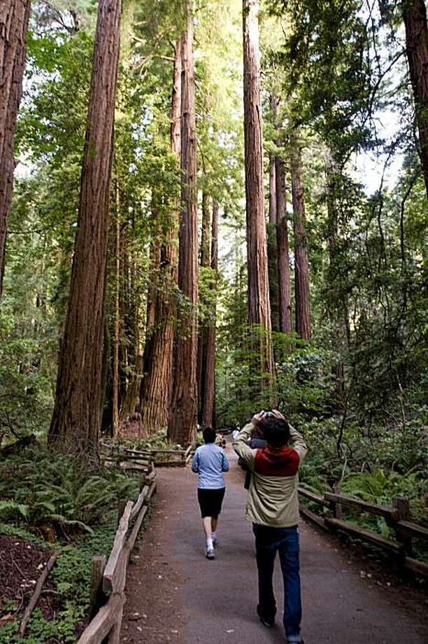 Tourists snap photos in the Muir Woods in Marin County, Calif., on Thursday, July 8, 2010. Photo: Chad Ziemendorf, The Chronicle