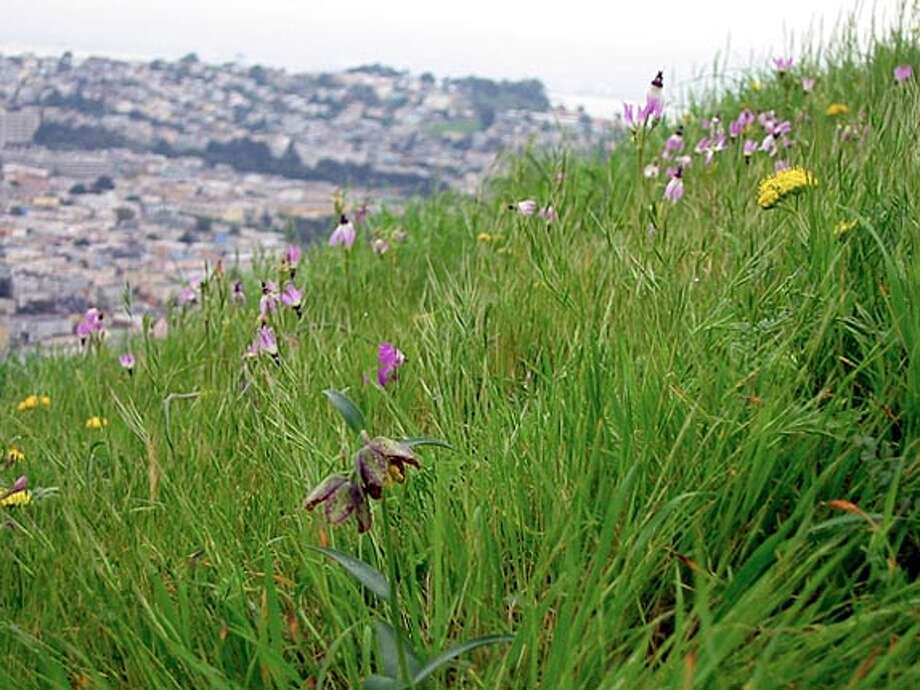 Bernal Heights grassland. Photo: Geoffrey Coffey