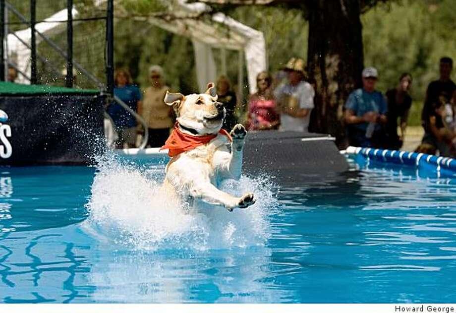 Splash dog competitor Photo: Howard George