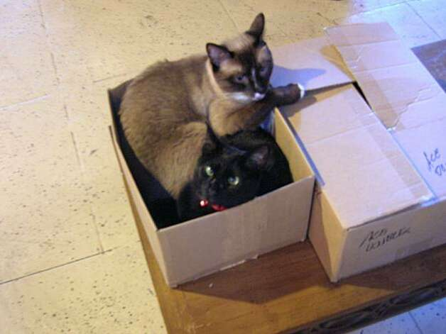 story about cats in bookstores-- sam and trouble from The Other Change of Hobbit, Berkeley Photo: Courtesy, The Other Change Of Hobbit
