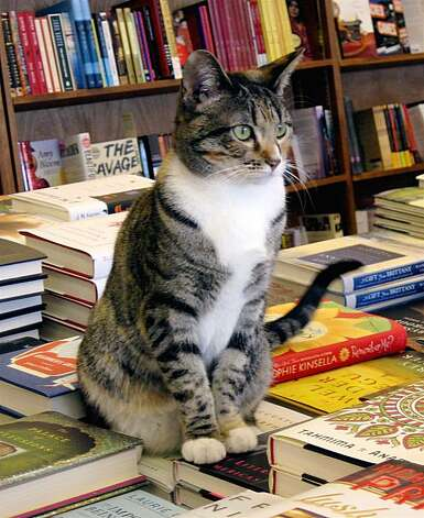 story about cats in bookstores-- Ginger from Orinda books Photo: Courtesy, Orinda Books
