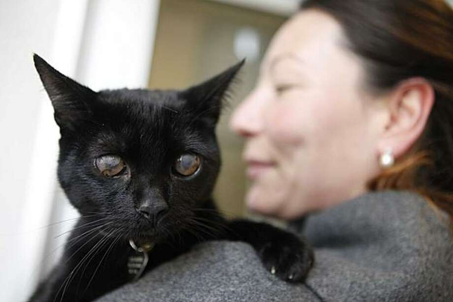 SPCA communications manager Jennifer Lu holds Jack Daniels on Tuesday in San Francisco. Jack was stolen from the shelter last summer only to turn up in a New York City animal care and control facility. Thanks to micro-chip identification and donated airfare from Jet Blue, Jack is back in San Francisco. Photo: Mike Kepka, The Chronicle
