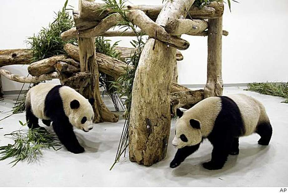 "In this photo released by Taipei City Government, Tuantuan, right, and Yuanyuan, names together means ""reunion,"" arrive at their new house at Taipei City Zoo, Tuesday, Dec. 23, 2008, in Taipei, Taiwan. A pair of giant pandas arrived in Taiwan on Tuesday as a gift from rival China, another symbolic step forward in the two sides' rapidly improving relations. (AP Photo/Taipei City Government, HO) Photo: AP"