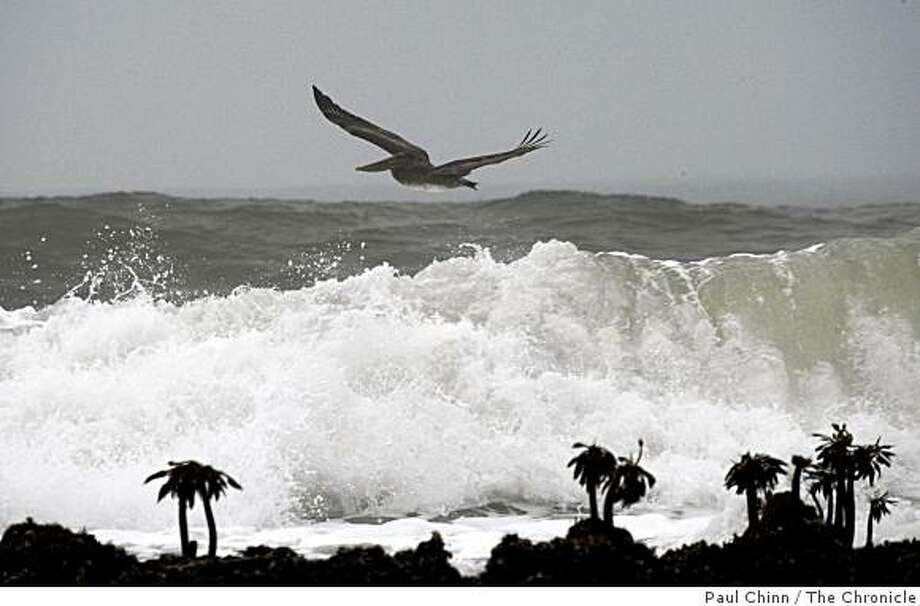 A pelican soars above the breaking surf on the eve of the countdown for annual Mavericks big wave surfing competition in Pillar Point, Calif. on Thursday, Dec. 6, 2007. PAUL CHINN/The Chronicle Photo: Paul Chinn, The Chronicle