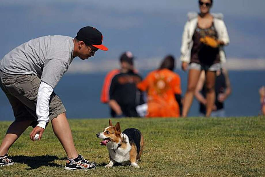 Stewey the corgie chases a ball as his owner, Joellen Ferrer, rear, and Mike Law play catch on the lawn outside AT&T Park before the Giants game against the Los Angeles Dodgers on Sunday, August 1, 2010, in San Francisco, Calif.  San Francisco Bay Area residents enjoyed one of the first warm days in several weeks as temperatures rose in the region on Sunday, August 1, 2010. Photo: Carlos Avila Gonzalez, The Chronicle