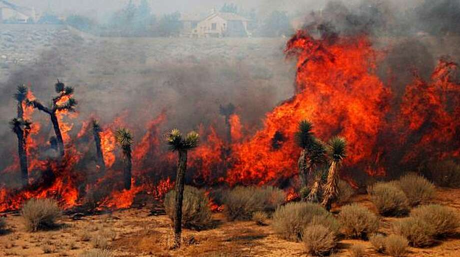 With houses seen in the background, flames from the Crown Fire burn plants as it races across the desert near Lake Elizabeth Road in Palmdale, Calif., Friday, July 30, 2010. Photo: Mike Meadows, AP