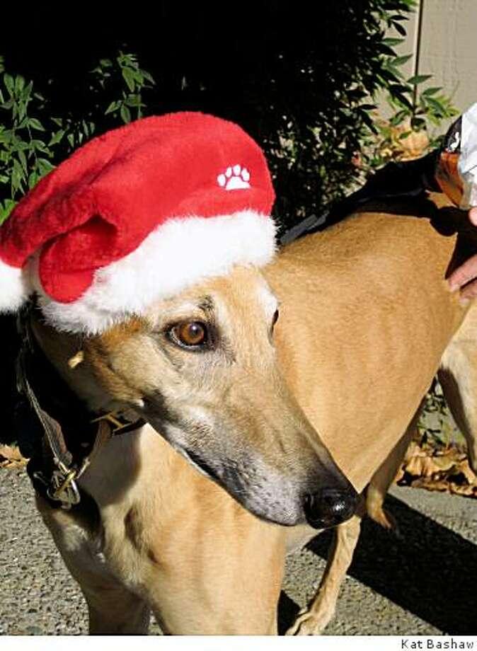 A gray-bearded Elvis in his Santa hat, 2008 Photo: Kat Bashaw