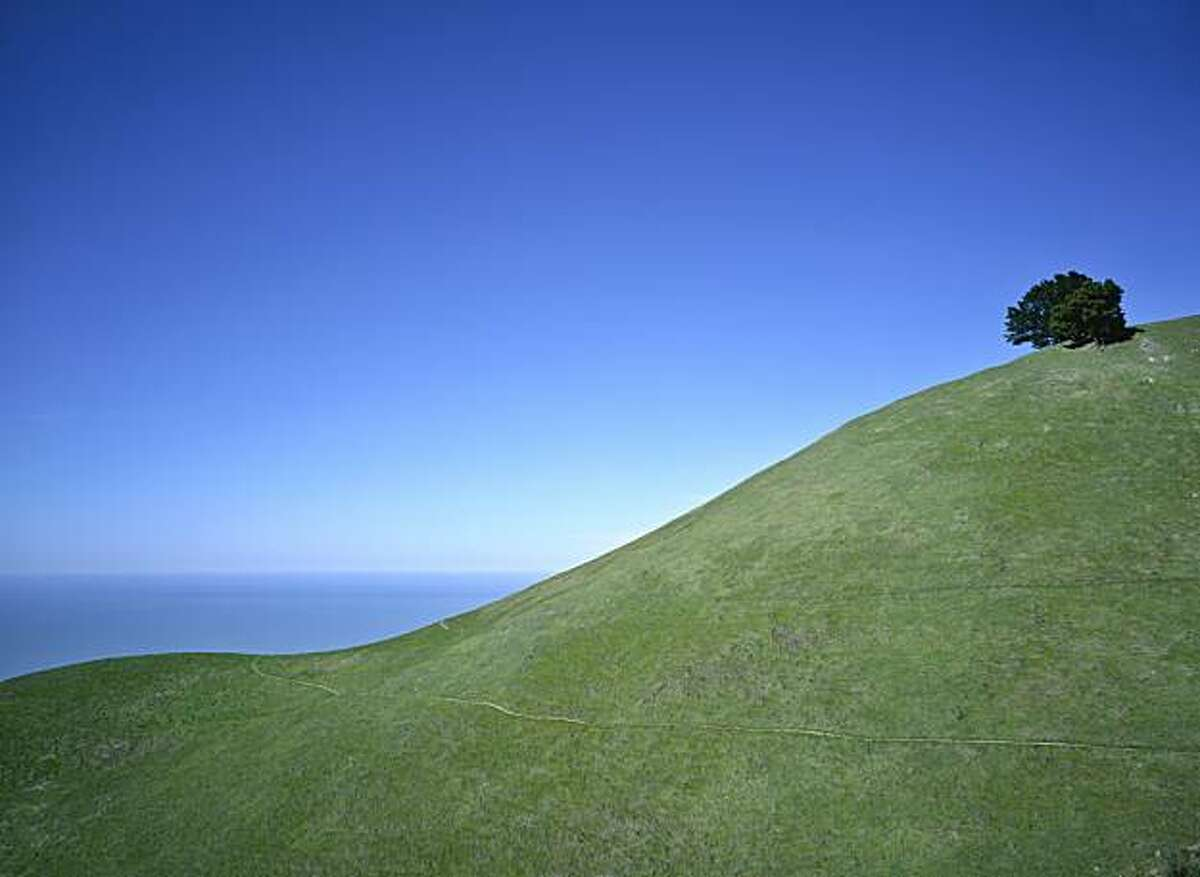 The landscape: A gently curving hill on Mt. Tamalpais. Although Wilson inclines toward dramatic angles in both nature and architecture, he also loves the soft curve of this hill.
