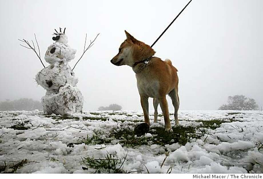 """Anakin"" checks out a snowman his owner, Carl Haber and friends built on Tuesday Dec. 16, 2008, on the service road, near Vollmer's Peak above Tilden Park in Berkeley, Calif., after an overnight blanket of snow covered the Berkeley Hills. Photo: Michael Macor, The Chronicle"