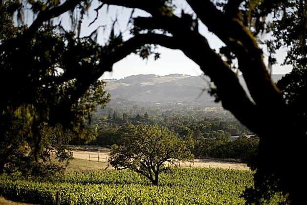 Sonoma vineyards, in Sonoma, Ca. Photo: Lianne Milton, Special To The Chronicle