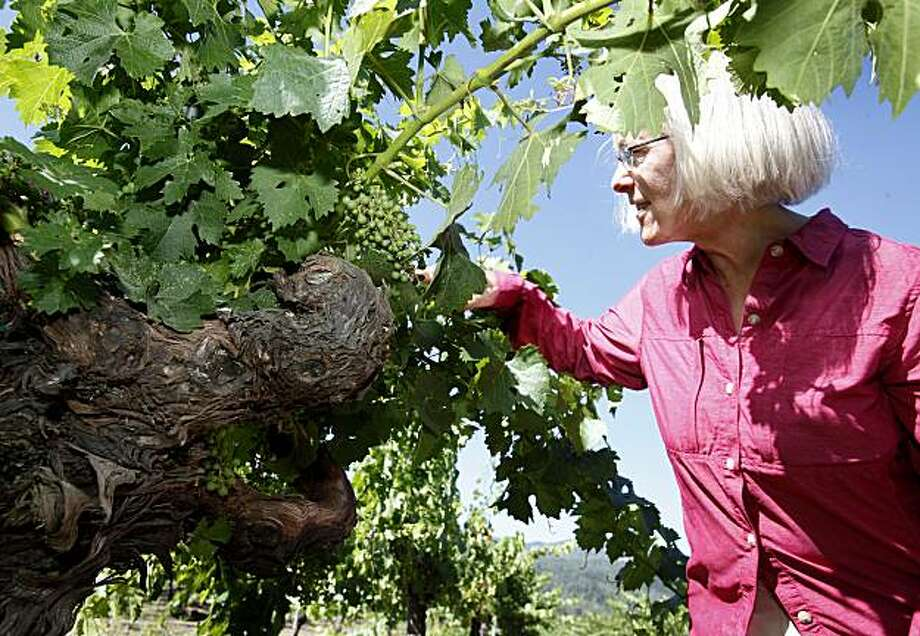 Cathy Corison has older St. George root stock in her Kronos vineyard near St. Helena, Calif.  She puts up with the leafroll virus and says it reduces the sugar level of her grapes, a trait she prefers in these cabernet sauvignon variety. The leafroll virus that is affecting California vineyards is most noticeable at harvest time when the leaves of red grape vines turn red and white grape vines curl and turn brownish. Photo: Brant Ward, The Chronicle