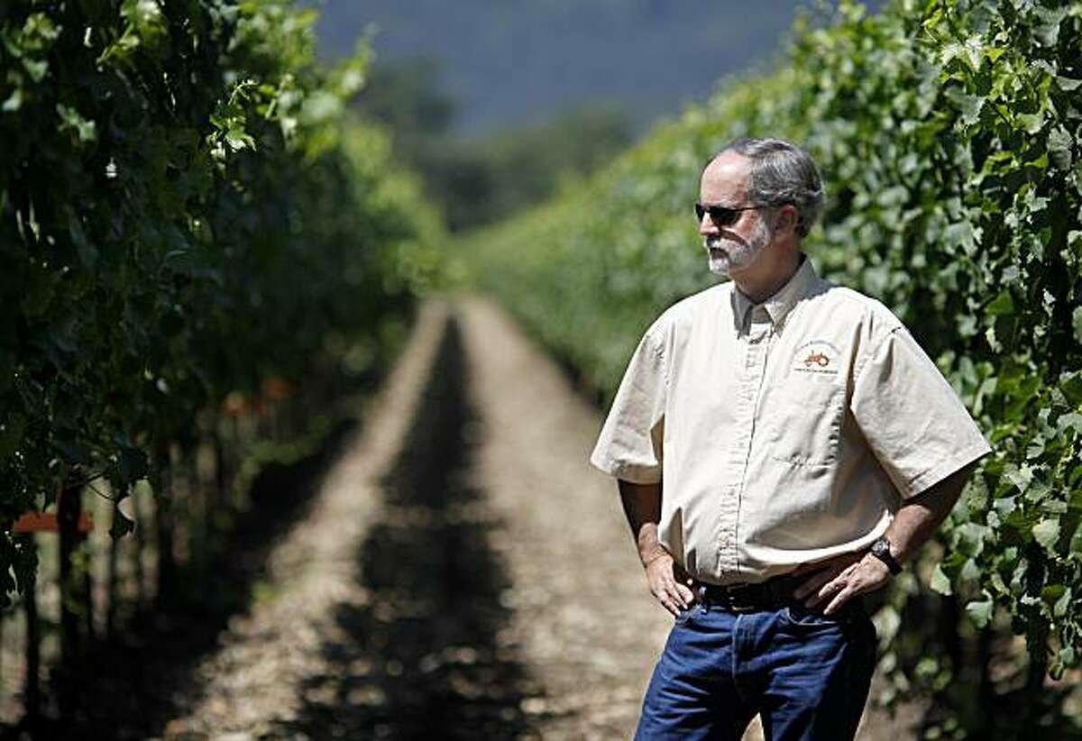 Paul Jackson, who owns Colinas Farming, has several tracts of vineyards effected by the leafroll virus near Rutherford, Calif. He says there is no cure yet. The leafroll virus that is affecting California vineyards is most noticeable at harvest time when the leaves of red grape vines turn red and white grape vines curl and turn brownish.