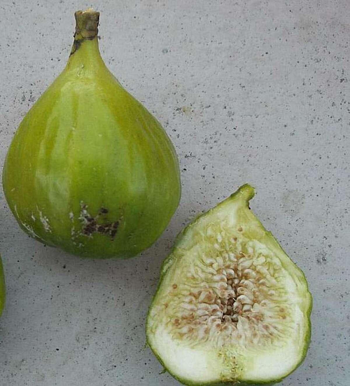 'Lattarula' fig