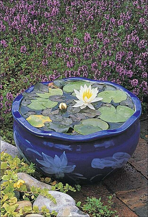 Water lilies float in a glazed pot. Photo: John Glover/Timber Press.
