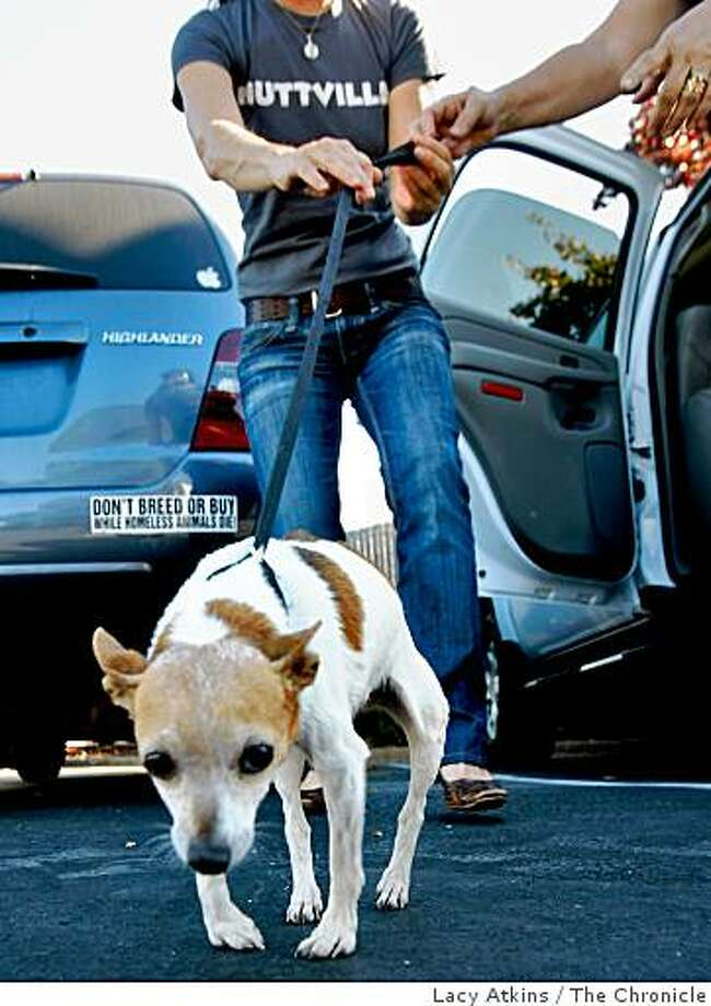 Sherri Franklin of Muttville receives an older dog which was transported by a volunteer to a parking lot in Richmond from an Antioch shelter. The dog was given up to the shelter because of its health problems and was adopted soon after coming to Muttville. Photo: Lacy Atkins, The Chronicle