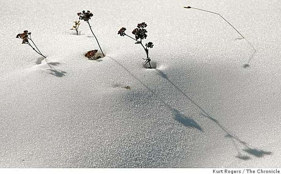 Weeds sticking out of the snow the real snow at Boreal looks to be about six inches deep. on Saturday Nov 8,  2008 in Truckee , Calif Photo: Kurt Rogers, The Chronicle