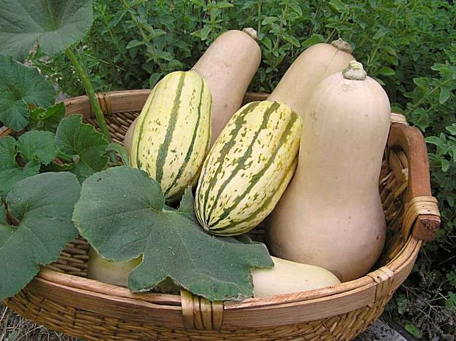 Tri-color seed packets from Renee's Garden contain three varieties of squash. Photo: Courtesy Renee's Garden