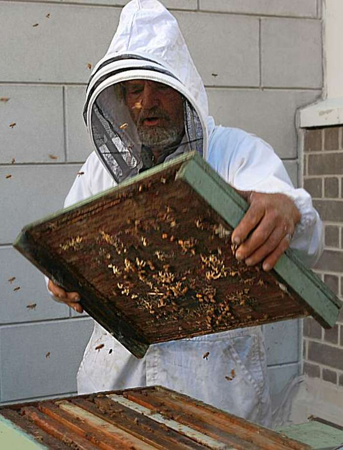 Apiarist Spencer Marshall unveiling four beehives to their new apiary at the Fairmont hotel lobby garden in San Francisco, California, on Thursday, June 17, 2010.  Each hive contains 20,000 bees, which when mature in four to eight weeks, will each house up to 50,000 bees.  Today's bee installation is the first step in cultivating a culinary garden which will eventually measure 1,000 square feet. Photo: Liz Hafalia, The Chronicle