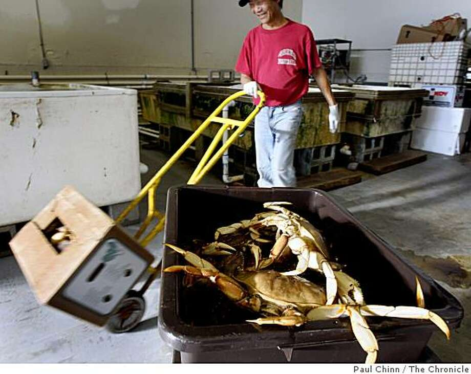 An employee rolls a carton of fresh Dungeness crabs past another crate of the crustaceans at G & J Express seafood company at Pier 45 in San Francisco, Calif., on Saturday, Nov. 15, 2008. Photo: Paul Chinn, The Chronicle