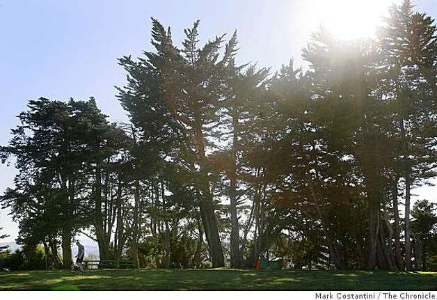 Sun reflects through the trees at McKinley Square Park in San Francisco, Calif. on Friday, November 7, 2008 Photo: Mark Costantini, The Chronicle
