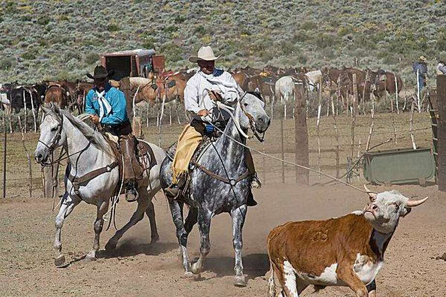 Roping during the Reno Rodeo cattle drive. Photo: Kevin Bell