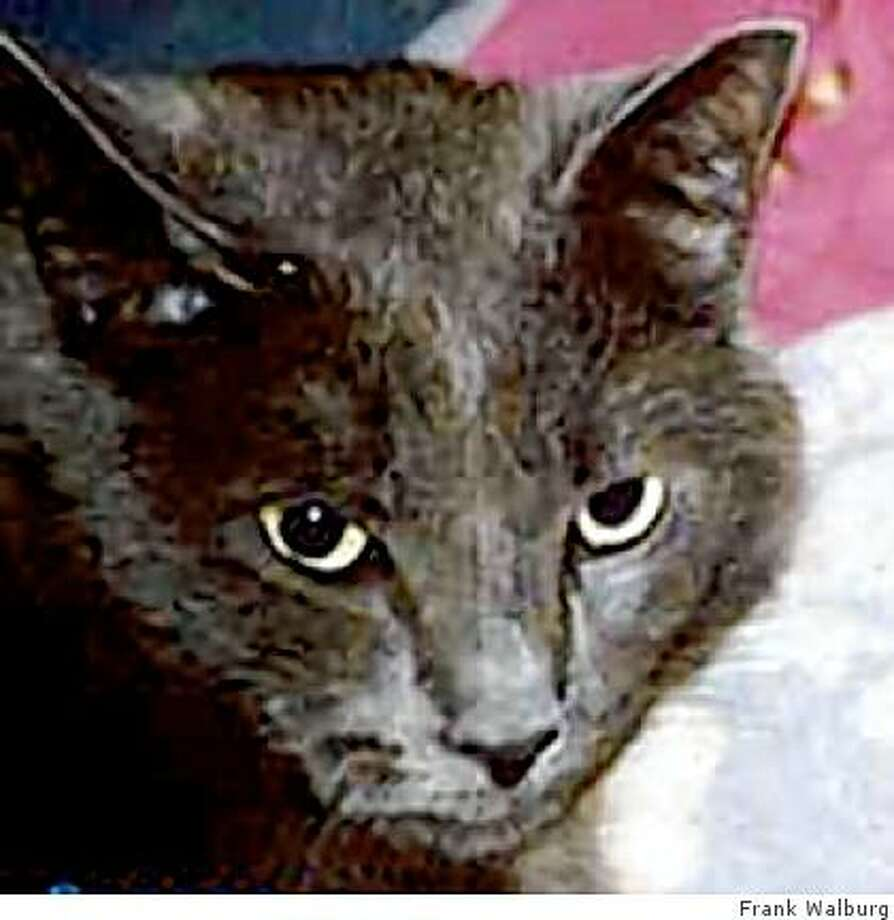 George the cat was reunited with family after 13 years. Photo: Frank Walburg