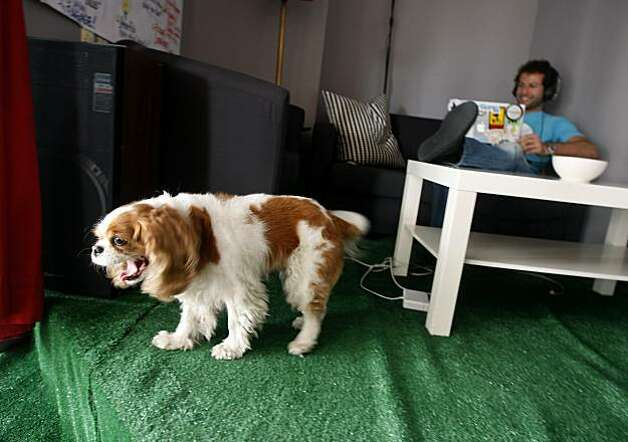 Honey, the mascot dog, awakens from a nap while Clement Alteresco works on a couch at the PariSoma innovation loft in San Francisco, Calif., on Thursday, June 3, 2010. Photo: Paul Chinn, The Chronicle