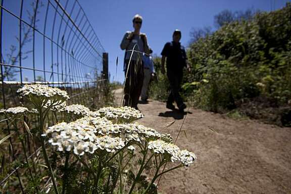 People walk past a Yarrow plant along the Ecological and Bay Area Ridge Trails in the Presidio on Saturday in San Francisco. Hosted by the Presidio Trust, volunteers joined park staff and AmeriCorps National Civilian Community Corps in trail and landscape maintenance.