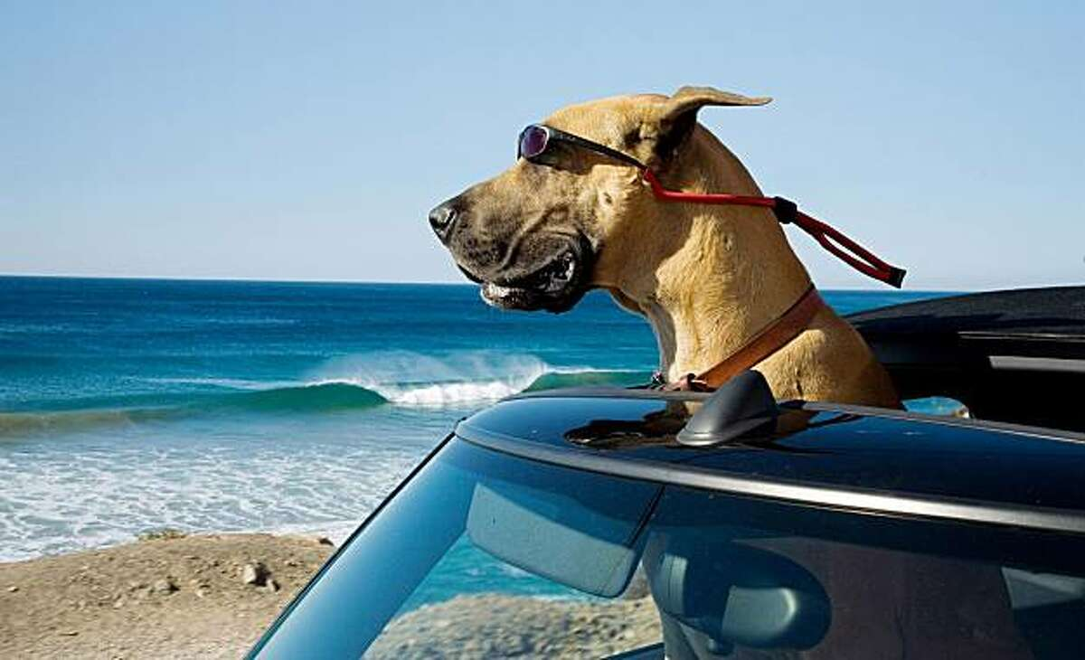 """In this film publicity image released by Fox, Marmaduke the dog is shown in a scene from, """"Marmaduke."""""""