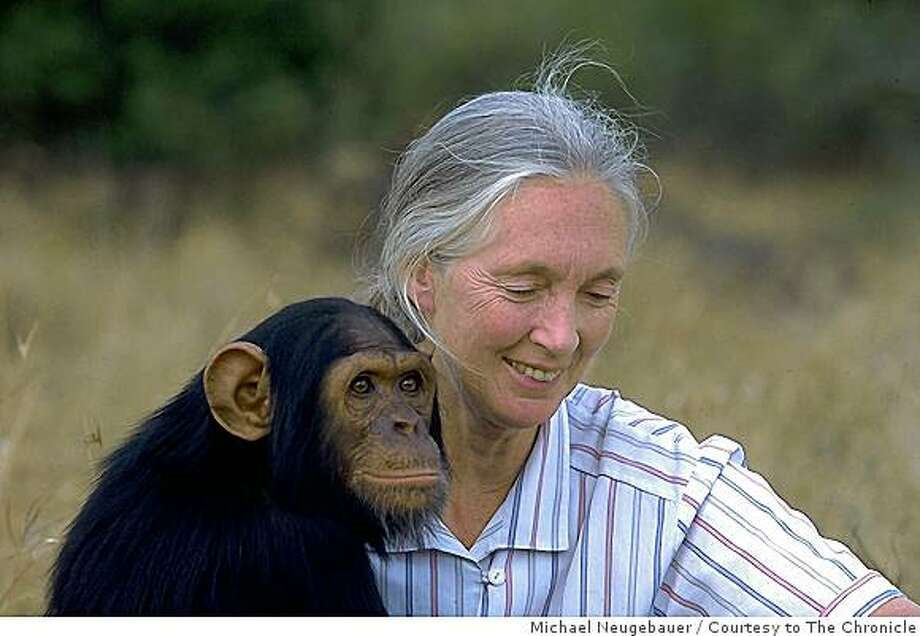 Dr. Jane Goodall with an orphan Chimpanzee at the Tchimpounga Sanctuary in the Republic of Congo. **This photo must include the following disclaimer: Dr. Goodall does not handle wild chimps.  This orphan chimpanzee lives at a JGI sanctuary. Photo: Michael Neugebauer, Courtesy To The Chronicle