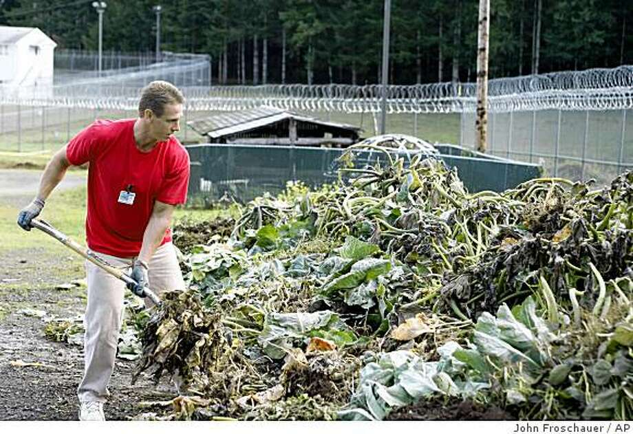 Inmate Robert Knowles pitches plant stalks into a compost pile at the Cedar Creek Corrections Center in rural southwest, Wash. on Friday, Oct. 17, 2008. The minimum-security prison has adopted many environmental and cost saving practices. (AP Photo/John Froschauer) Photo: John Froschauer, AP