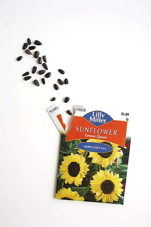 Sunflower seed packet in San Francisco, Calif., on May 26, 2010. Photo: Craig Lee, Special To The Chronicle