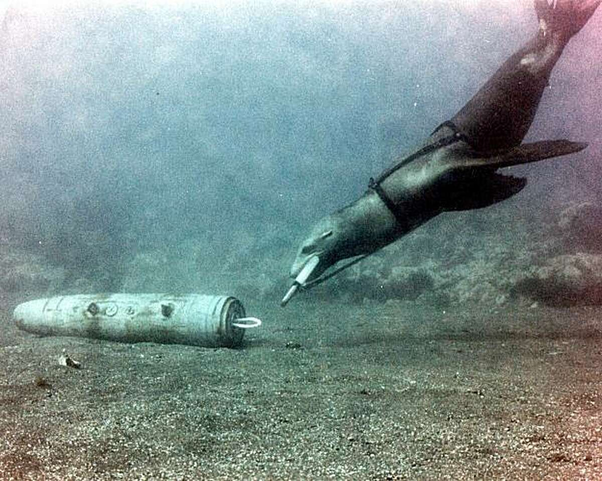 A sea lion uses a C-clamp to recover an anti-submarine rocket in a test exercise off Hawaii. Specially trained sea lions now use the same type of clamp to cuff the leg of suspicions divers.