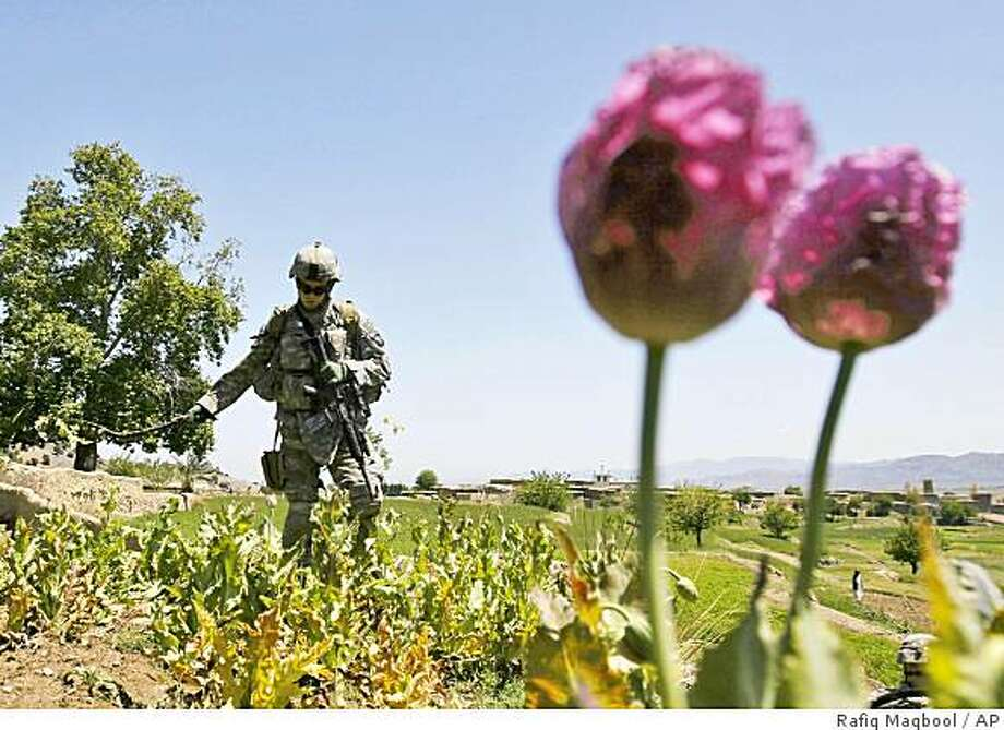** FILE ** In this Wednesday, April 16, 2008 file photo, a U.S. soldier of the 101st Airborne Division destroys opium poppies growing in a field during a patrol with Afghan police in Tani district of Khost province, Afghanistan. U.S. and U.N. experts agree that Afghanistan will harvest fewer poppy plants bound for the drug trade in 2008 after two years of record crops. But they have radically different estimates about what that decline will mean for opium production.  (AP Photo/Rafiq Maqbool) Photo: Rafiq Maqbool, AP