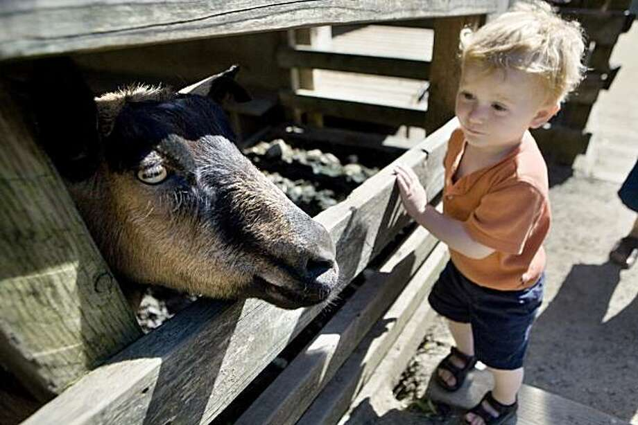 The youngest of four boys, Matthew Gradwell, 2, from Tucson, stops for a close-up look at a goat at the Little Farm in Berkeley on Sunday, May 2, 2010.  Tilden Nature Area just north of Tilden Regional Park includes the Little Farm and Environmental Education Center and Jewel Lake, a rustic one-acre pond in the 750-acre area just north of Tilden Regional Park. Kat Wade / Special to the Chronicle Photo: Kat Wade, Special To The Chronicle