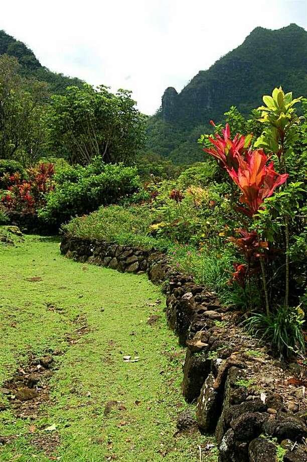 Preserving Hawaii\'s rare native plants - SFGate