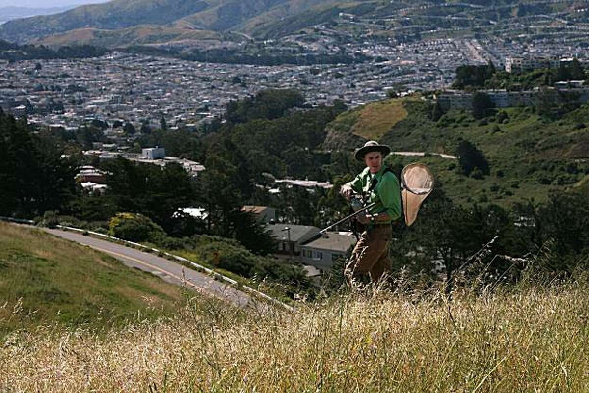 Lepidopterist Liam O'Brien searching for the mission blue butterfly on Twin Peaks in San Francisco, Calif., on Thursday, May 6, 2010. The endangered species is from the Lycaenidae family and it's wingspan is 1 to 1.5 inch