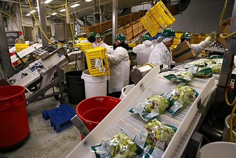 ORGANIC03_792_cl.JPG Story on organic farms. This is Earthbound Farm in San Juan Bautista owned by Drew and Myra Goodman. Photo of the salad lettuce being packaged. Craig Lee / The Chronicle Photo: Craig Lee, The Chronicle