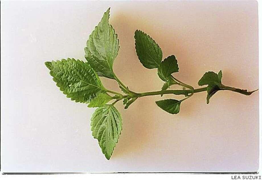 Shiso leaf Photo: LEA SUZUKI