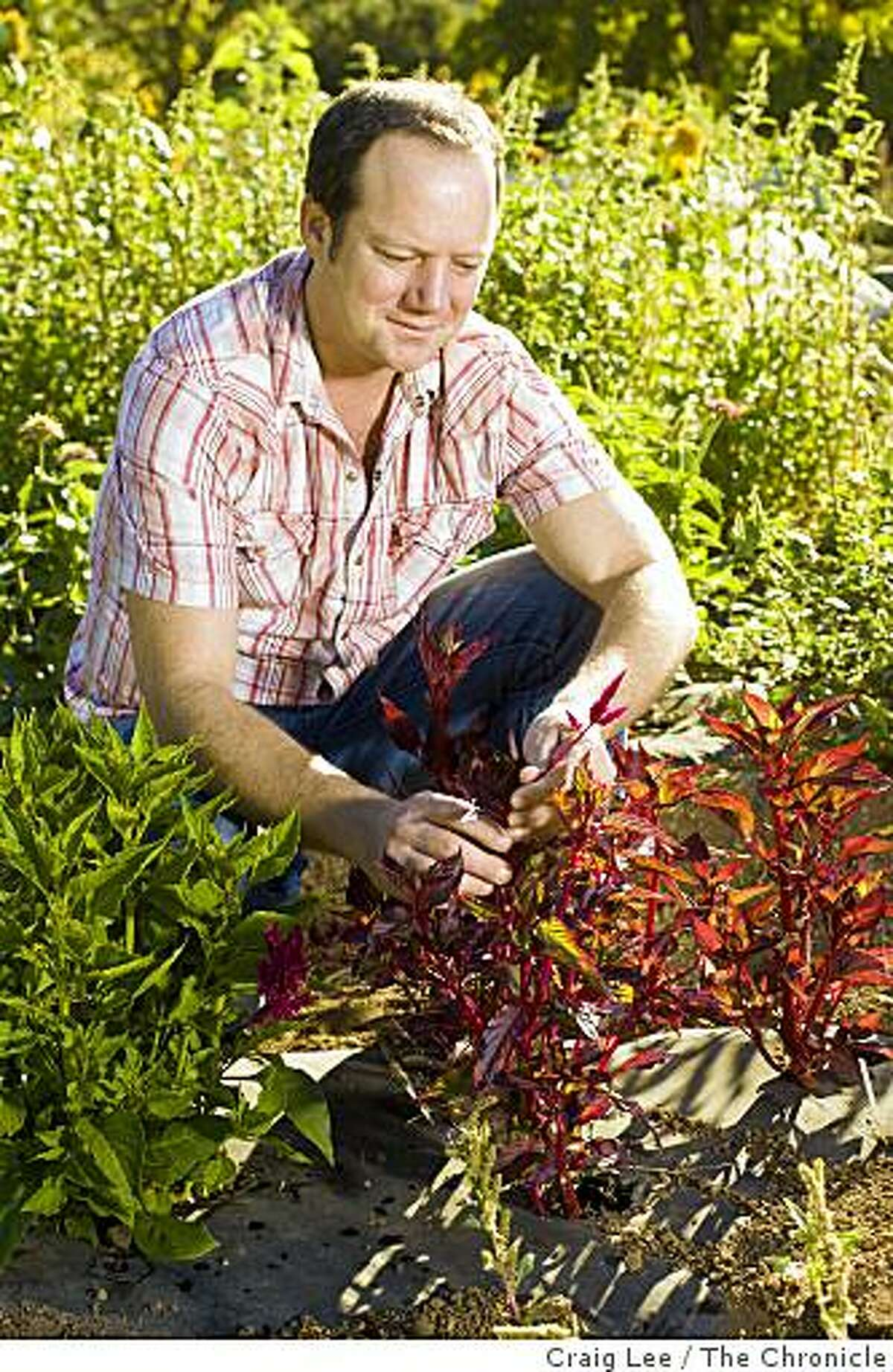 Scott Beattie next to an amaranth plant, one of the many flavor ingredients for his cocktail drinks, in Healdsburg, Calif., on September 26, 2008.