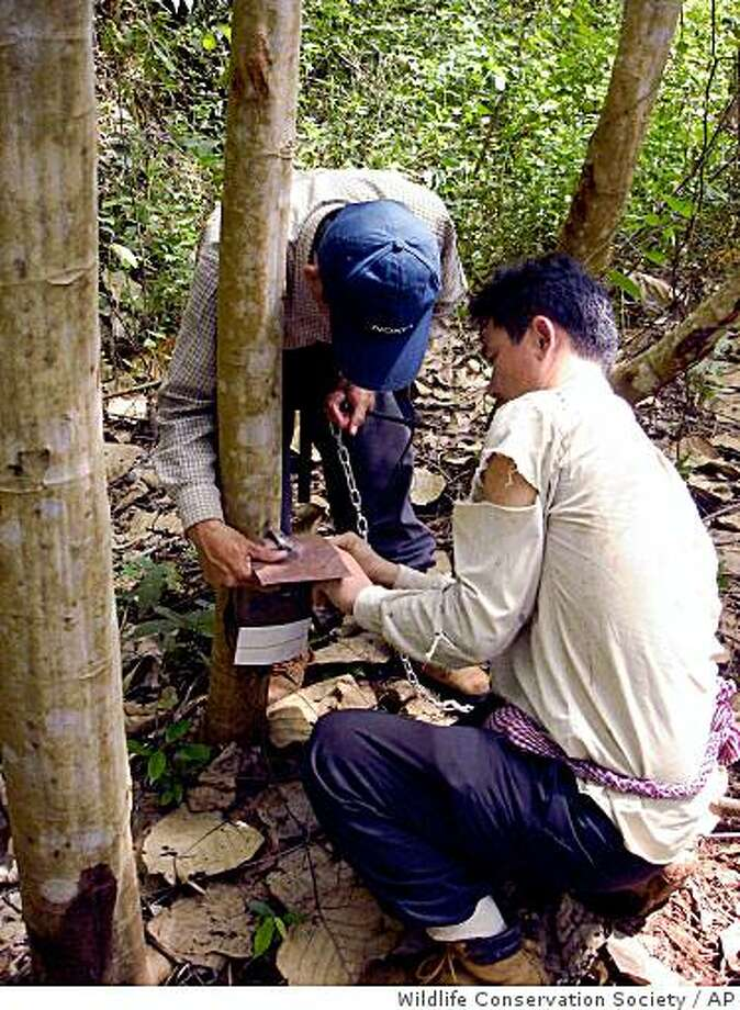 ** ADVANCE FOR SUNDAY, MARCH 4 ** In this photo released by the Wildlife Conservation Society, Cambodia soldiers set a camera trap Sunday, Nov. 26, 2006, in the jungle forest in southern Mondulkiri province of Cambodia. Once a hotspot on the Ho Chi Minh Trail during the Vietnam War, the area and its wildlife are now protected against hunters. (AP Photo/Wildlife Conservation Society, HO) Photo: Wildlife Conservation Society, AP